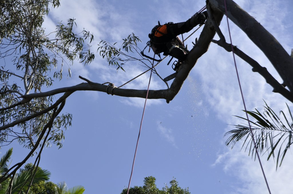 Tree Removals Sunshine Coast 1