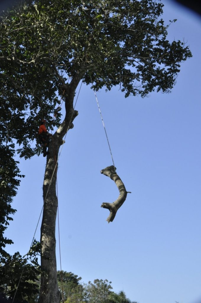 Tree Removals Sunshine Coast 10