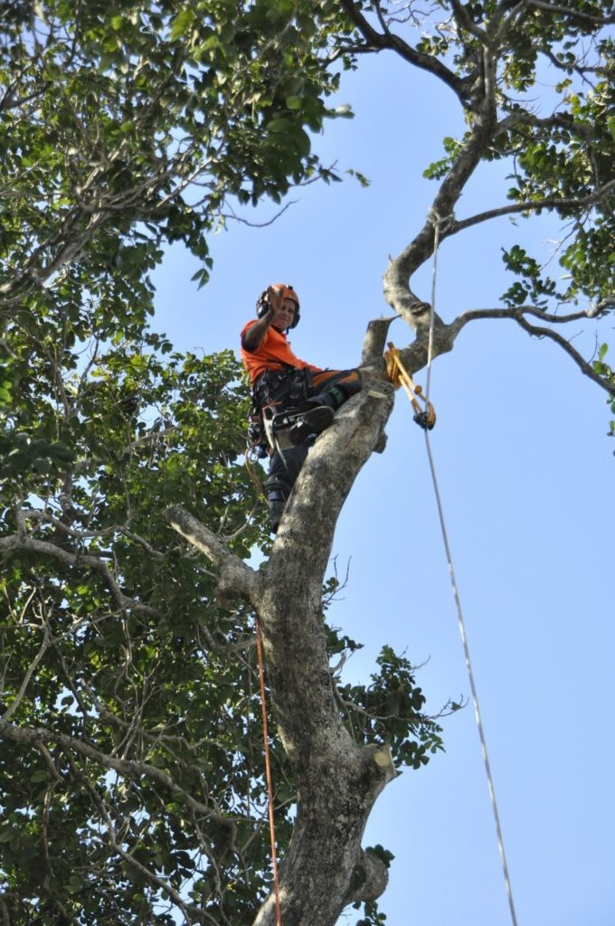 Tree Removals Sunshine Coast 11