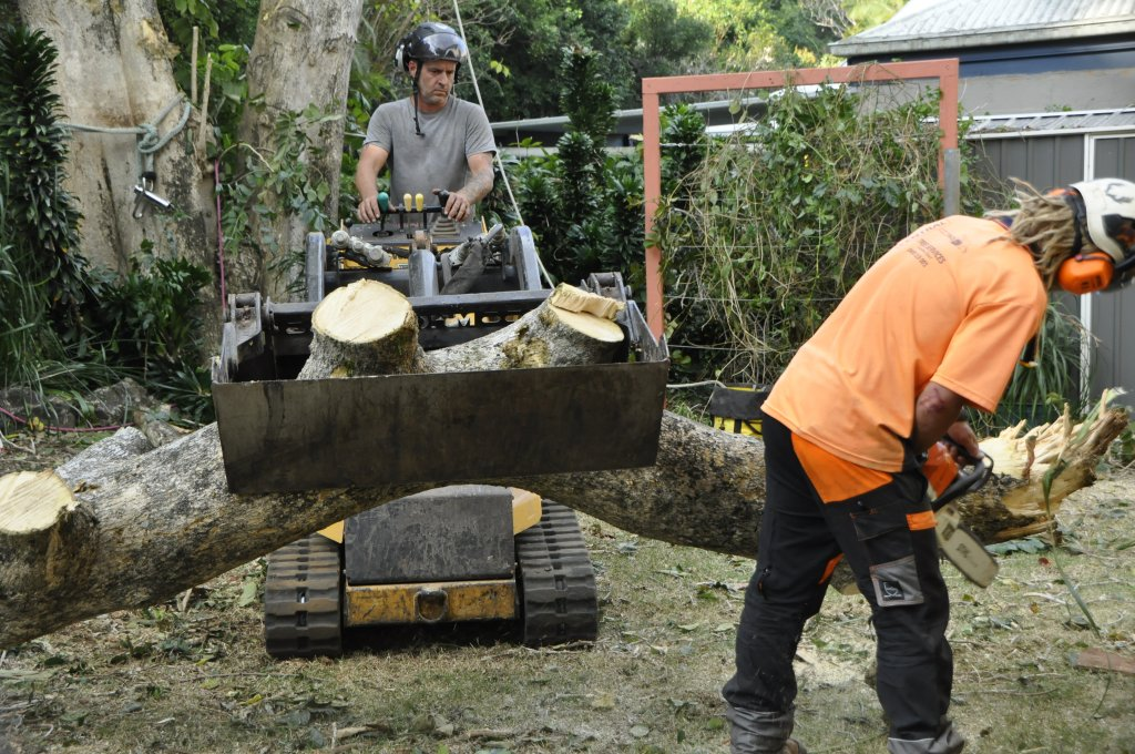 Tree Removals Sunshine Coast 12