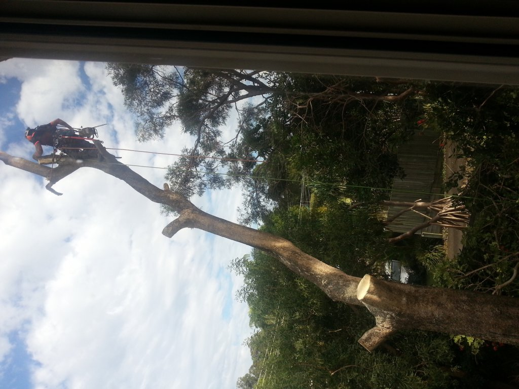 Tree Removals Sunshine Coast 16