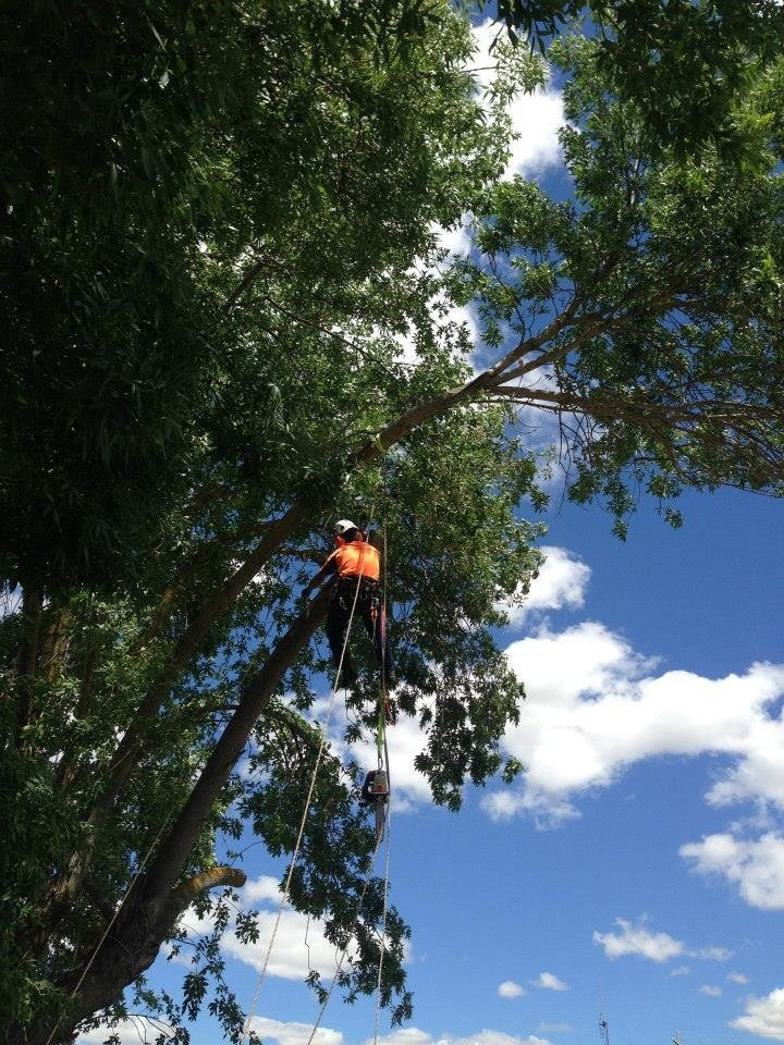 Tree Removals Sunshine Coast 18
