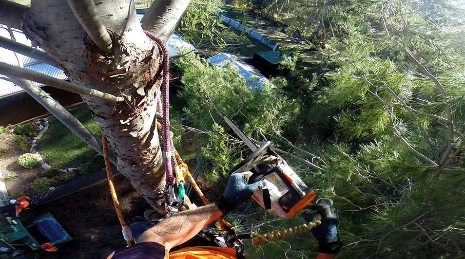 Tree Removals Sunshine Coast 19