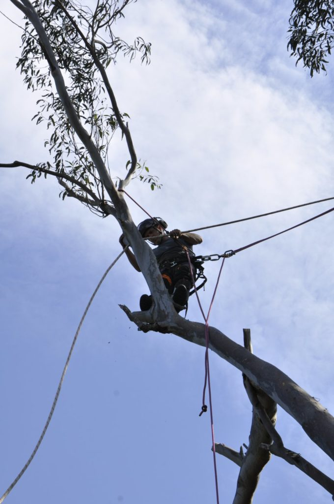 Tree Removals Sunshine Coast 2