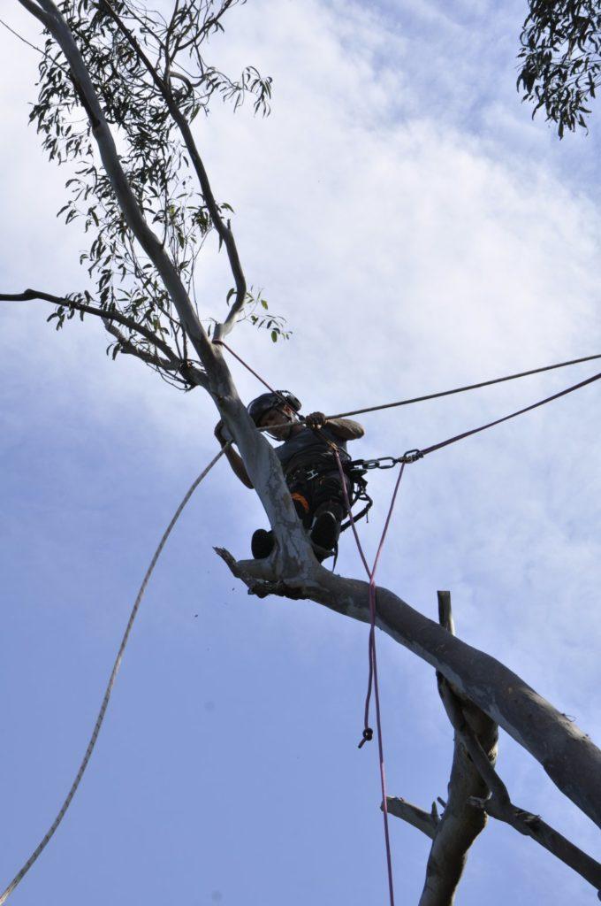 Tree Removals Sunshine Coast 2