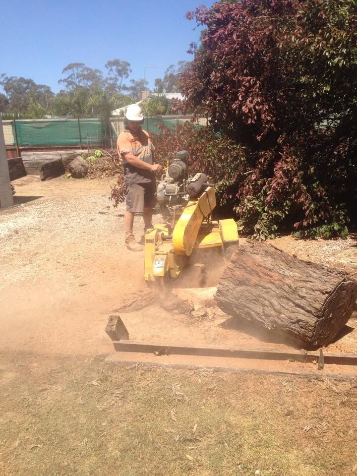 Tree Removals Sunshine Coast 20