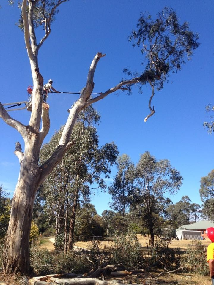 Tree Removals Sunshine Coast 21