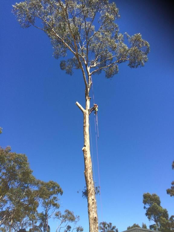 Tree Removals Sunshine Coast 22