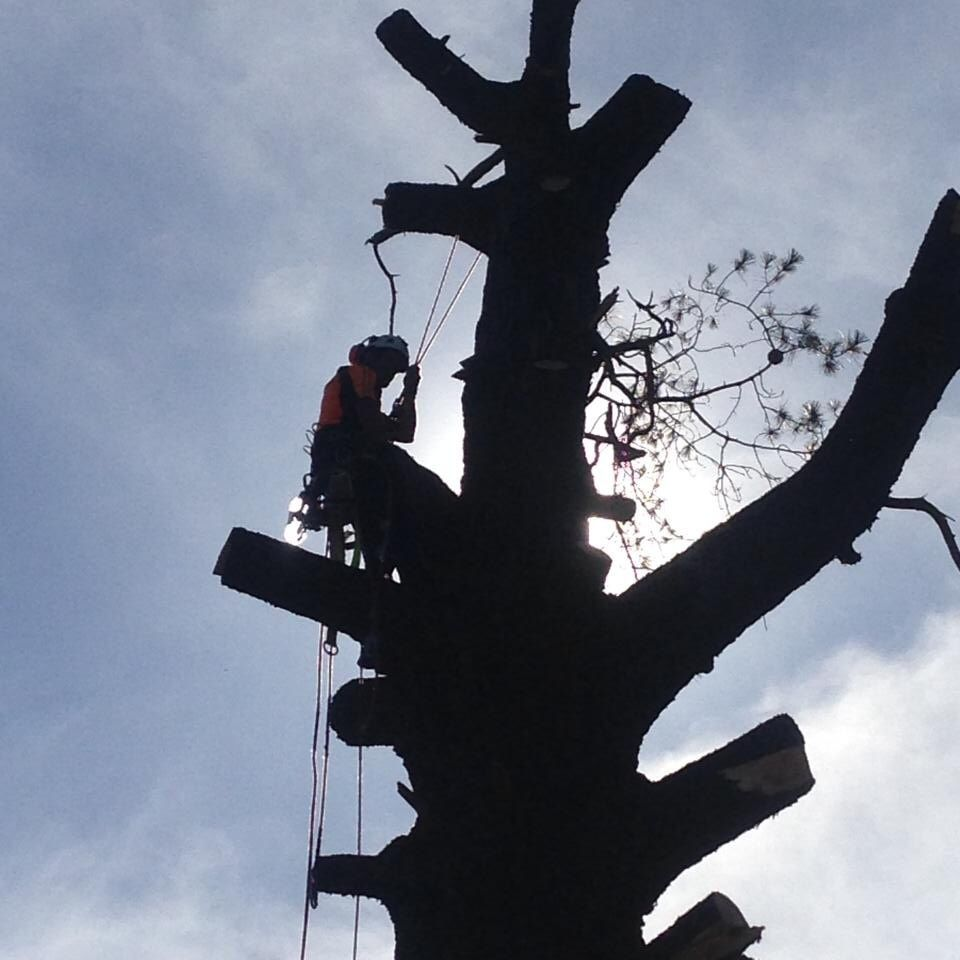 Tree Removals Sunshine Coast 23