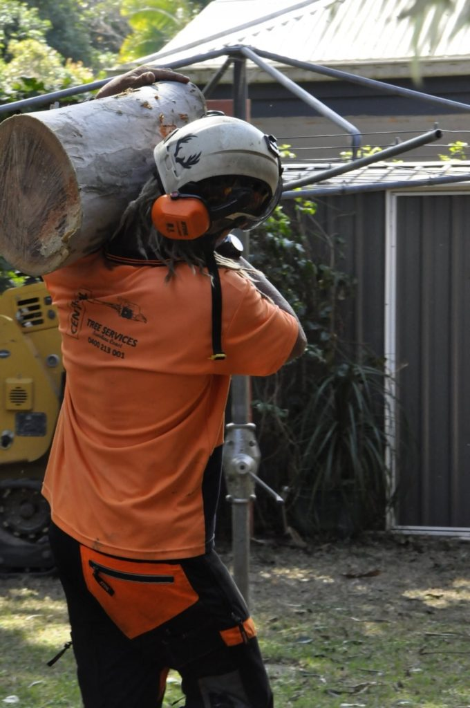 Tree Removals Sunshine Coast 4