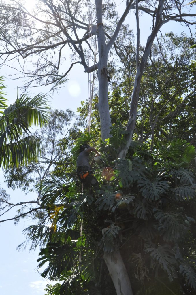 Tree Removals Sunshine Coast 5