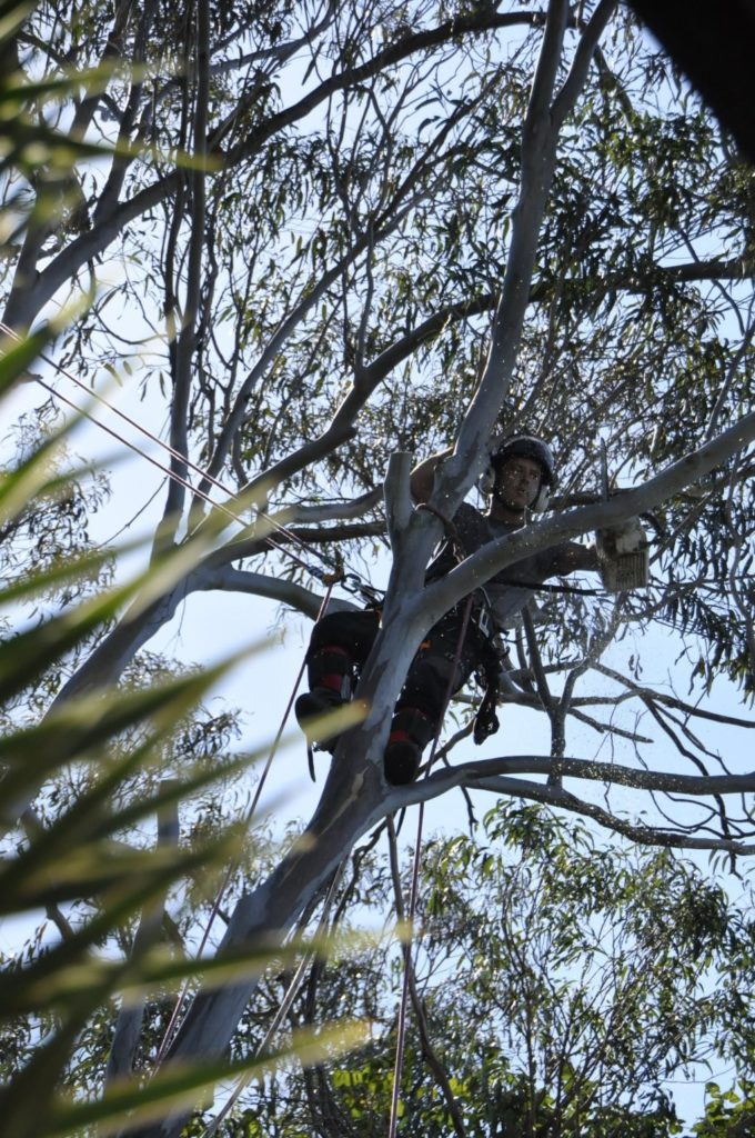 Tree Removals Sunshine Coast 6