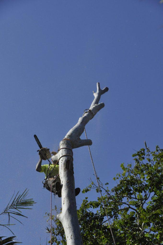 Tree Removals Sunshine Coast 7