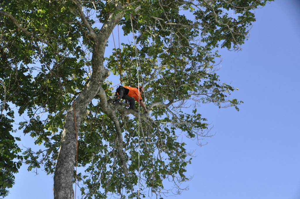 Tree Removals Sunshine Coast 8