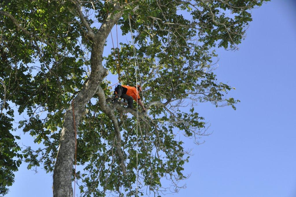 Tree Removals Sunshine Coast 8